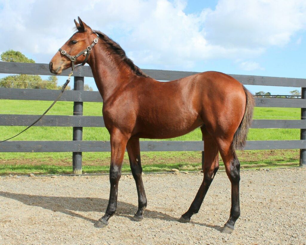 Lot 46 Art Major - Western Willow Filly