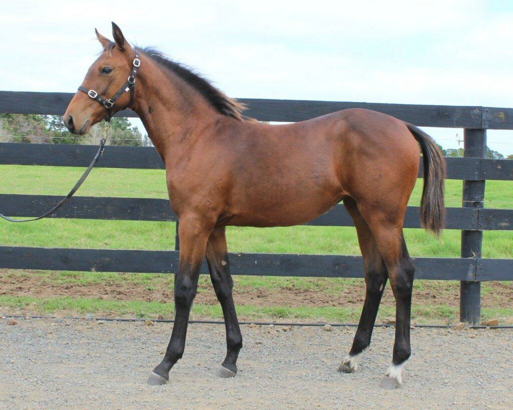 Lot 64 Vincent – Boom Time Baby Filly